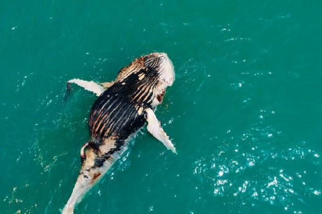 Cảnh tượng kỳ lạ này được ghi lại tại bờ biển Kimberley (Úc).
