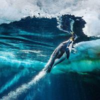 Phát hiện dạng sống kỳ dị, ăn khí độc trong hang ngập nước ở Mexico