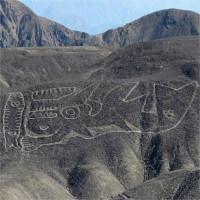 Hình vẽ cá voi sát thủ dài 70 mét trên sa mạc Peru
