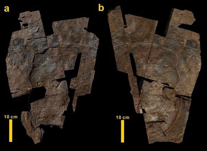 Mảnh da khủng long mới được tìm thấy.