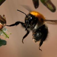 Thuốc trừ sâu thế hệ mới thân thiện với loài ong