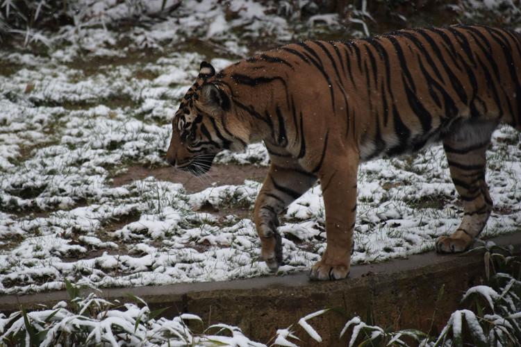 Ảnh chụp tại một sở thú ở thủ đô Washington D.C.