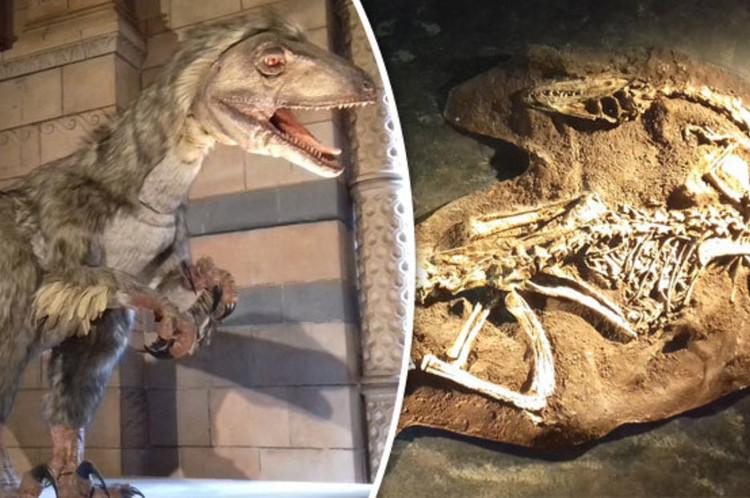 Các nhà khoa học từng khẳng định khủng long tuyệt chủng cách đây 65 triệu năm.