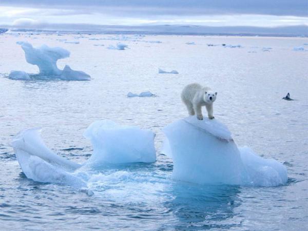 Băng tan tại Bắc Cực