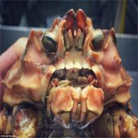 """Bộ ảnh """"quái vật ngoài hành tinh"""" dưới biển đã trở lại và kinh dị hơn xưa"""