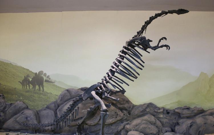 Bộ xương khủng long Vân Nam