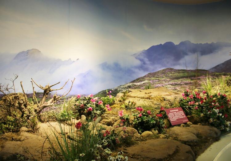 Mô phỏng thực vật tại núi Thương