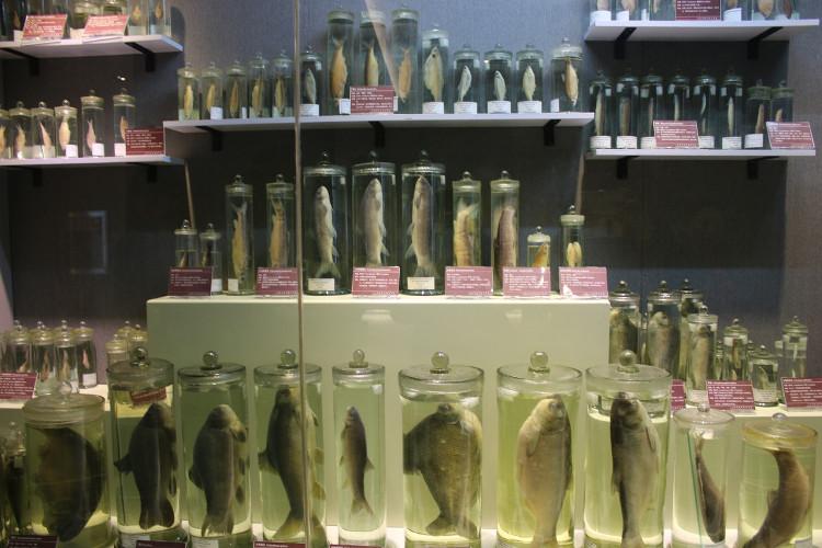 Các loài cá sống trong hồ Nhĩ Hải.
