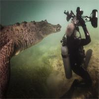 Cá sấu áp sát nhiếp ảnh gia dưới nước
