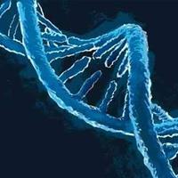 Liệu pháp gen sử dụng tế bào gốc tạo máu trong điều trị HIV/AIDS