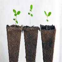 Không có não nhưng thực vật vẫn thông minh hơn chúng ta nghĩ