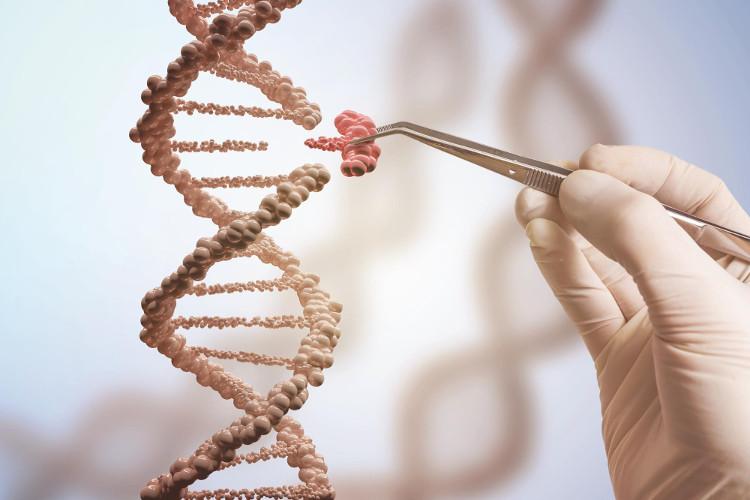 Chúng ta có thể cắt một đoạn rất nhỏ trong chuối ADN, và thay vào loại ADN đã được chỉnh sửa theo mong muốn.