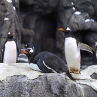 """-40 độ C, Canada lạnh đến nỗi chim cánh cụt phải """"lánh nạn"""""""