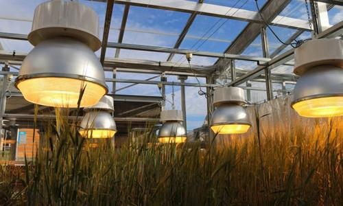 Hệ thống đèn giúp cây trồng sinh trưởng nhanh và cho năng suất cao.