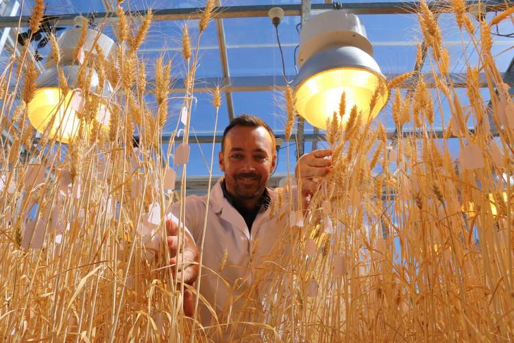 Cây trồng phát triển nhanh trong nhà kính nhờ phương pháp mới.