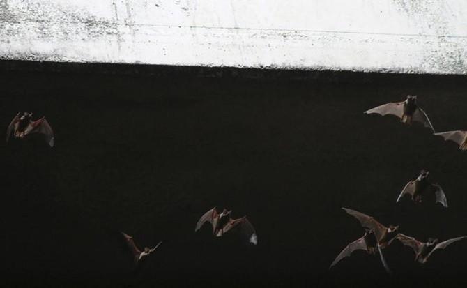 Trong thế giới tự nhiên, sóng âm và định vị bằng sóng âm không chỉ dành cho loài dơi