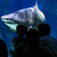 Con người và cá mập có cùng tổ tiên