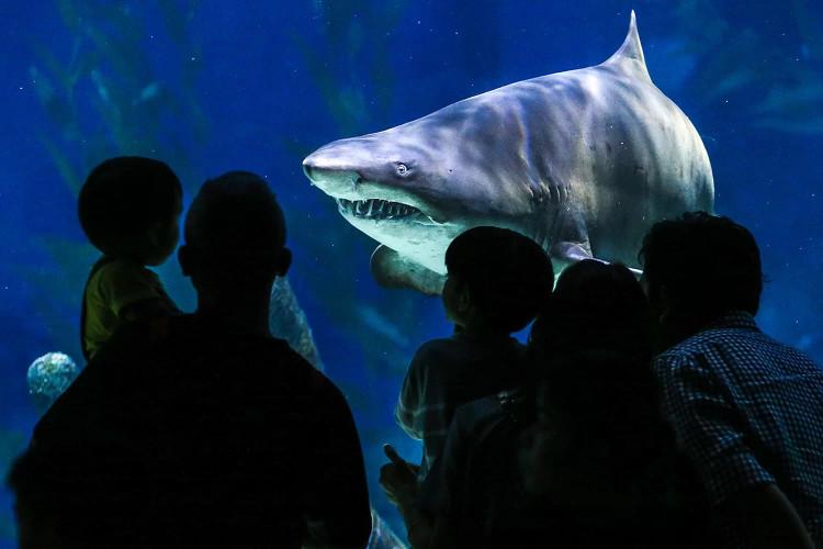 Nghe có vẻ buồn cười nhưng bạn và cá mập thực sự có chung một thủy tổ ở kỷ Silur