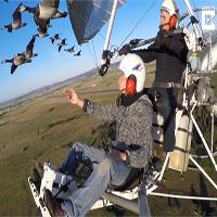 Video: Người chuyên dẫn đường cho các loài chim di cư tránh thợ săn