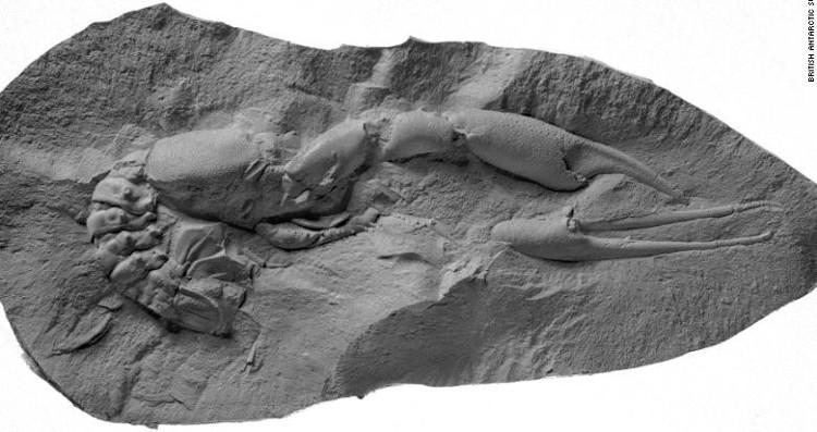Trong ảnh, một hóa thạch tôm hùm có niên đại vào thời gian loài khủng long biến mất khỏi Trái Đất