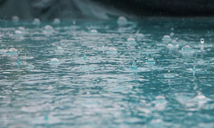Nước mưa là nguồn nước uống của rắn biển.