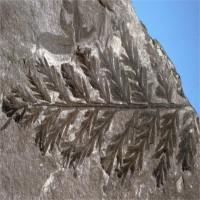 """Cuộc """"truy tìm"""" khu rừng 280 triệu năm trước ở Nam Cực"""