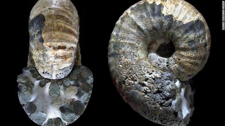 Một trong những thách thức với các nhà địa chất học là truy tìm niên đại của các hóa thạch.