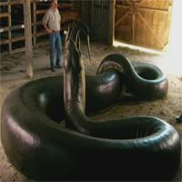 Mãng xà cổ đại nặng hơn một tấn chuyên ăn thịt cá sấu