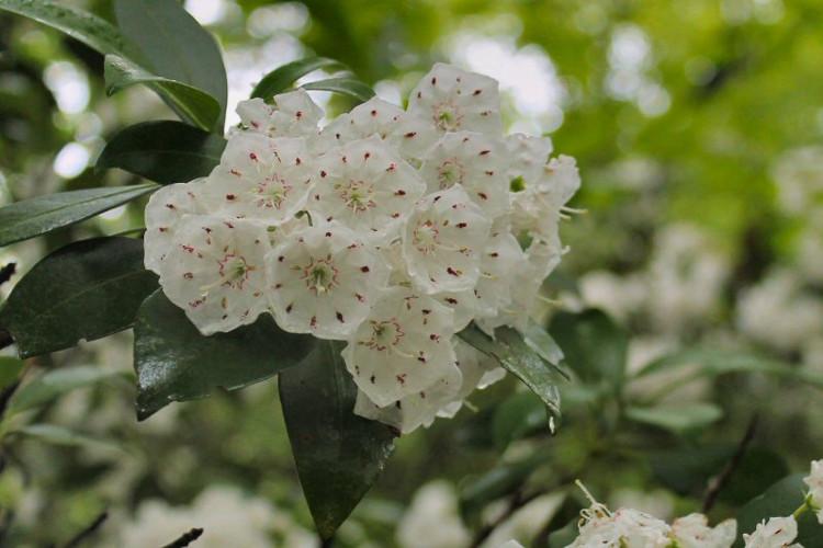 Hoa có màu hồng và trắng rất đẹp.