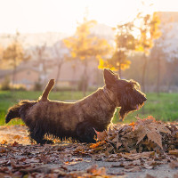 Lý giải hành động kỳ lạ chó sau khi đi vệ sinh mà lâu nay ta thường hiểu sai