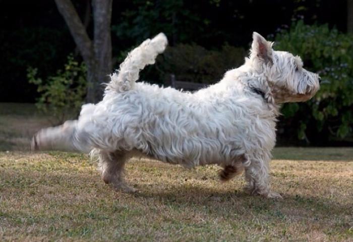 Chó thường dùng chân sau đạp cỏ hoặc đất đá về phía sau.