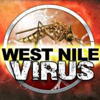 Phát hiện cách thức chữa mất trí nhớ do nhiễm virus Tây sông Nile