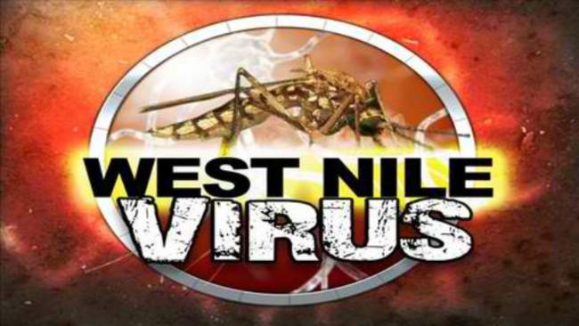 Virus tây sông Nile lan truyền do muỗi.