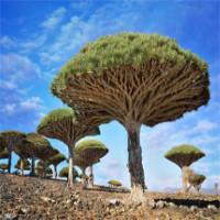 Đảo Socotra kỳ lạ