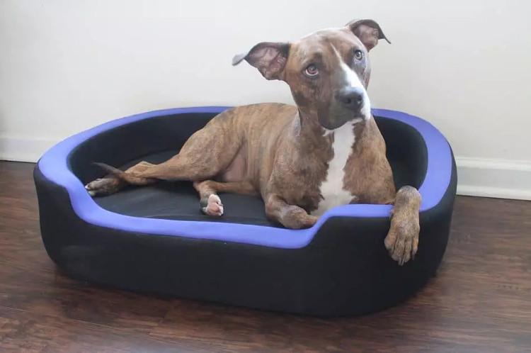 Chiếc giường thông minh dành cho thú cưng của hãng Petrics tại triển lãm.