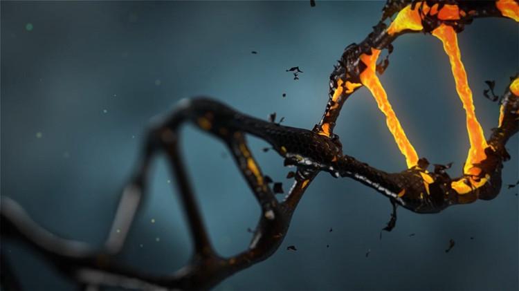 Nhiệm vụ tái cấu trúc DNA hoàn toàn dựa trên nghiên cứu mẫu DNA của hậu duệ người chết.