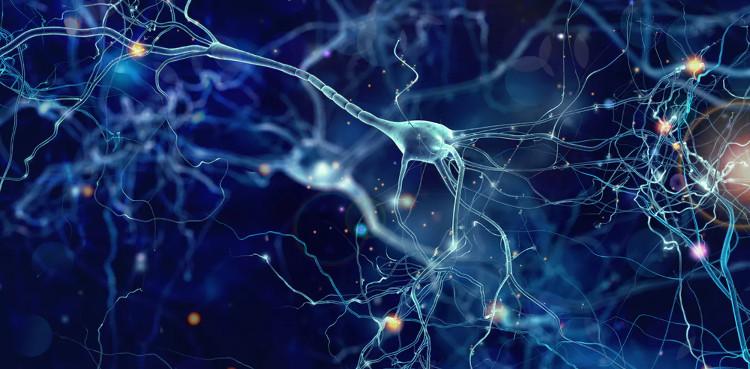 Sự liên kết đặc biệt trong não bộ khiến một số người có khả năng sáng tạo vượt trội