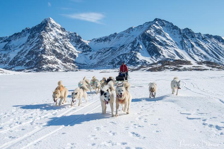 Xe chó kéo là phương tiện di chuyển chủ yếu ở Greenland.