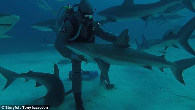 Con cá mập bị thôi miên giữa đại dương.