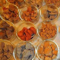 Atlas về những vi khuẩn phổ biến nhất trong đất