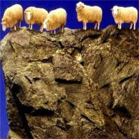 1.500 con cừu bỗng tự tử hàng loạt - bí ẩn 13 năm vẫn chưa có lời giải