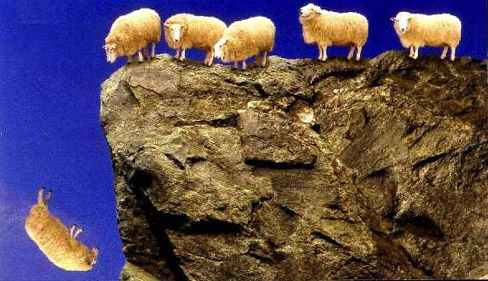 Cừu tự tử