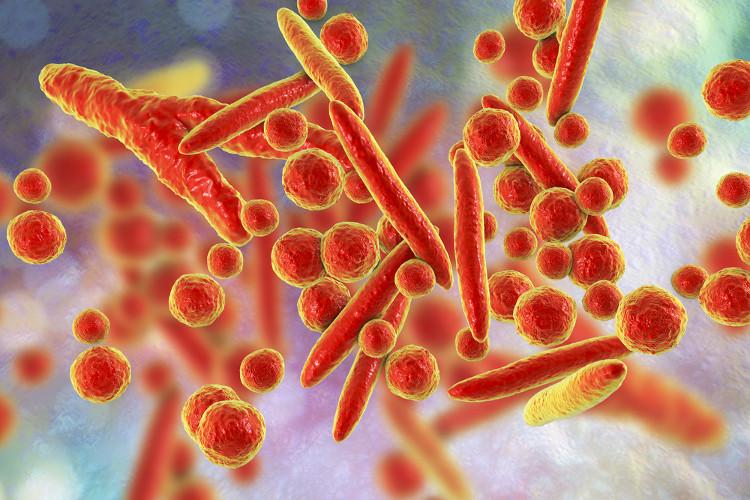 Vi khuẩn Mycoplasma genitalium dưới kính hiển vi.