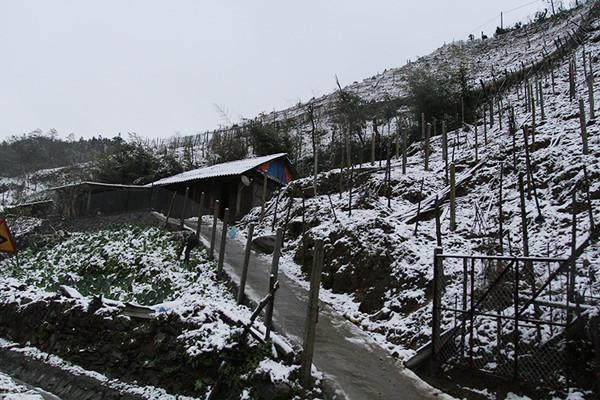Rét đậm, rét hại trải rộng từ các tỉnh Bắc Bộ đến Bắc Trung Bộ, vùng núi cao có băng giá.