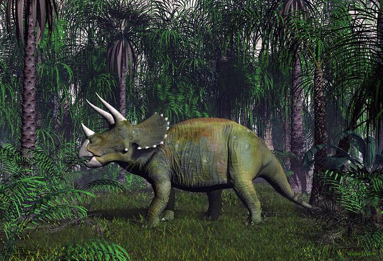 Loài khủng long Triceratop 3 sừng đã bị tuyệt chủng