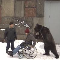 Video: Gấu đứng thẳng đẩy xe lăn cho người dạy xiếc