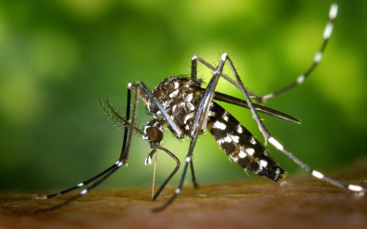 Muỗi có khả năng học hỏi và ghi nhớ.