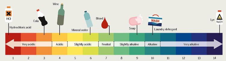 Các loại dung dịch phổ biến và độ pH của chúng.