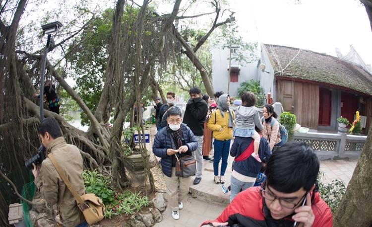 Ngay khi vừa được thả xuống, bầy Thiên nga đã thu hút sự chú ý của nhiều du khách.