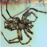 Hóa thạch 100 triệu năm của loài nhện đuôi dài như bọ cạp